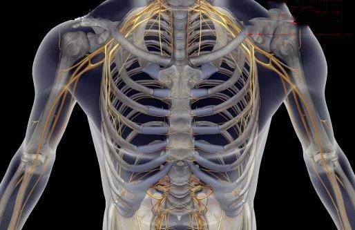 骨科执业医师证出租 找证(有证)挂靠的单位请联系我,专做医疗行业证书挂靠 聘证网-周先生 电话:13530313496 QQ:992737696 骨科首要研讨骨骼肌肉体系的解剖、生理与病理,运用药物、手术及物理办法坚持和开展这一体系的正常形状与功用。跟着年代和社会的改变,骨科伤病谱有了显着的改变,例如,骨关节结核、骨髓炎、小儿麻痹等疾病显着削减,交通事故导致的伤口显着增多。骨科伤病谱的改变,这就需求骨科与时俱进了。跟着中医的开展中医治疗骨科疾病也逐步被大家所追捧。